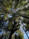 Certificación forestal: Garantia de futuro para nuestros bosques